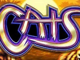 IGT – Cats